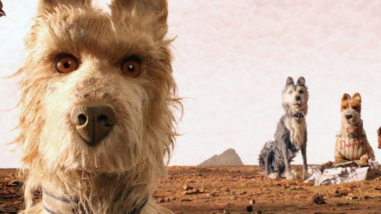 Un chien devant deux autres dans un désert, en marionnettes.