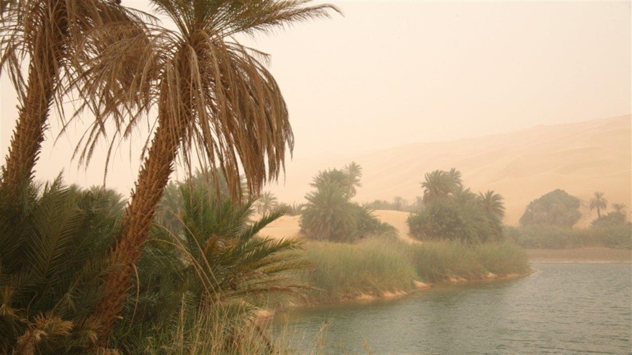 Deux palmiers poussent à côté d'une étendue d'eau.