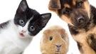 Déménagements : les abandons d'animaux sont nombreux