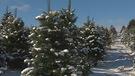 Acheter un sapin de Noël artificiel ou naturel?