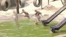 Un zoo construit un spa pour rafraîchir ses animaux