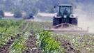 La chaleur exceptionnelle fait le bonheur des agriculteurs