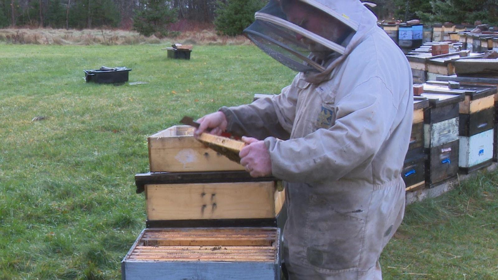 Un apiculteur examine les rayons de ses ruches