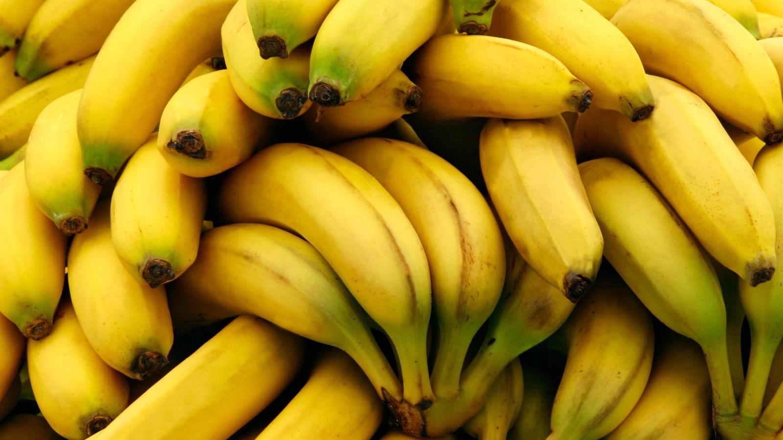 Une trentaine de bananes jaunes empilées pêle-mêle les unes sur les autres.