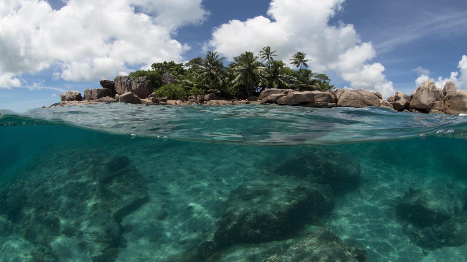 Une barrière de corail, sous l'eau.