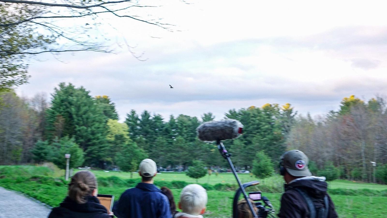 Au centre de l'écran, une grande chauve-souris brune qui prend son envol. Au bas de l'écran, une équipe de tournage