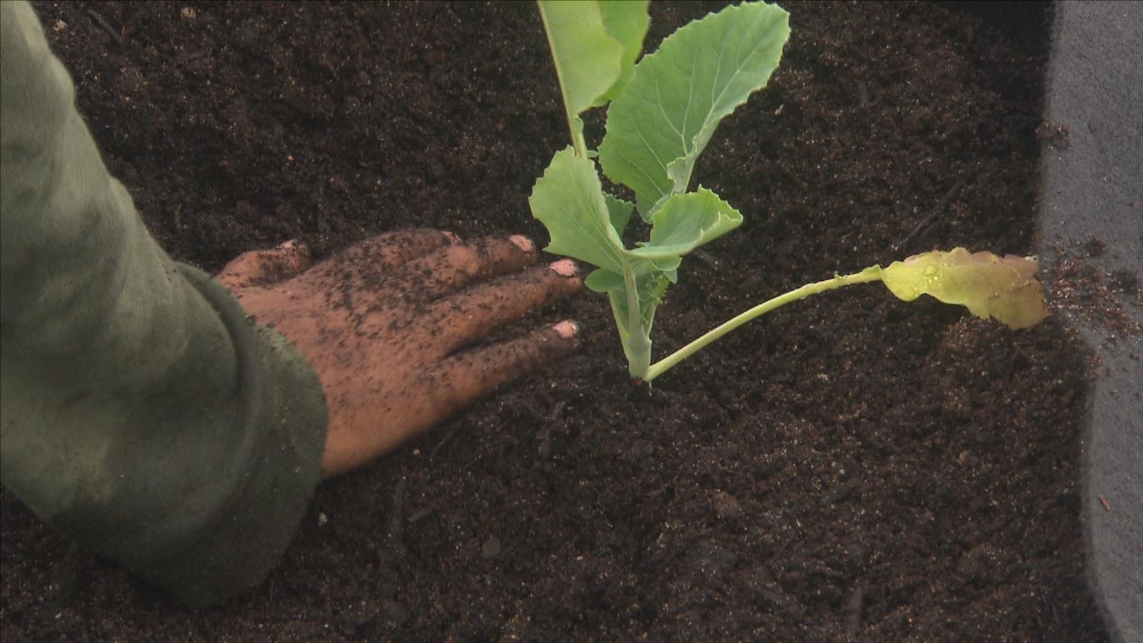 Une main plante un semi dans la terre.