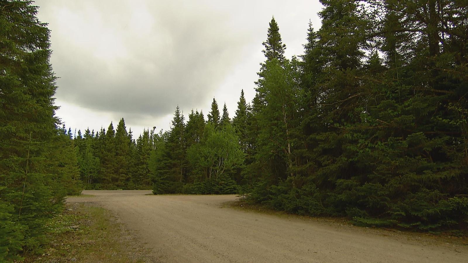 Chemin dans la forêt de la réserve faunique des Laurentides