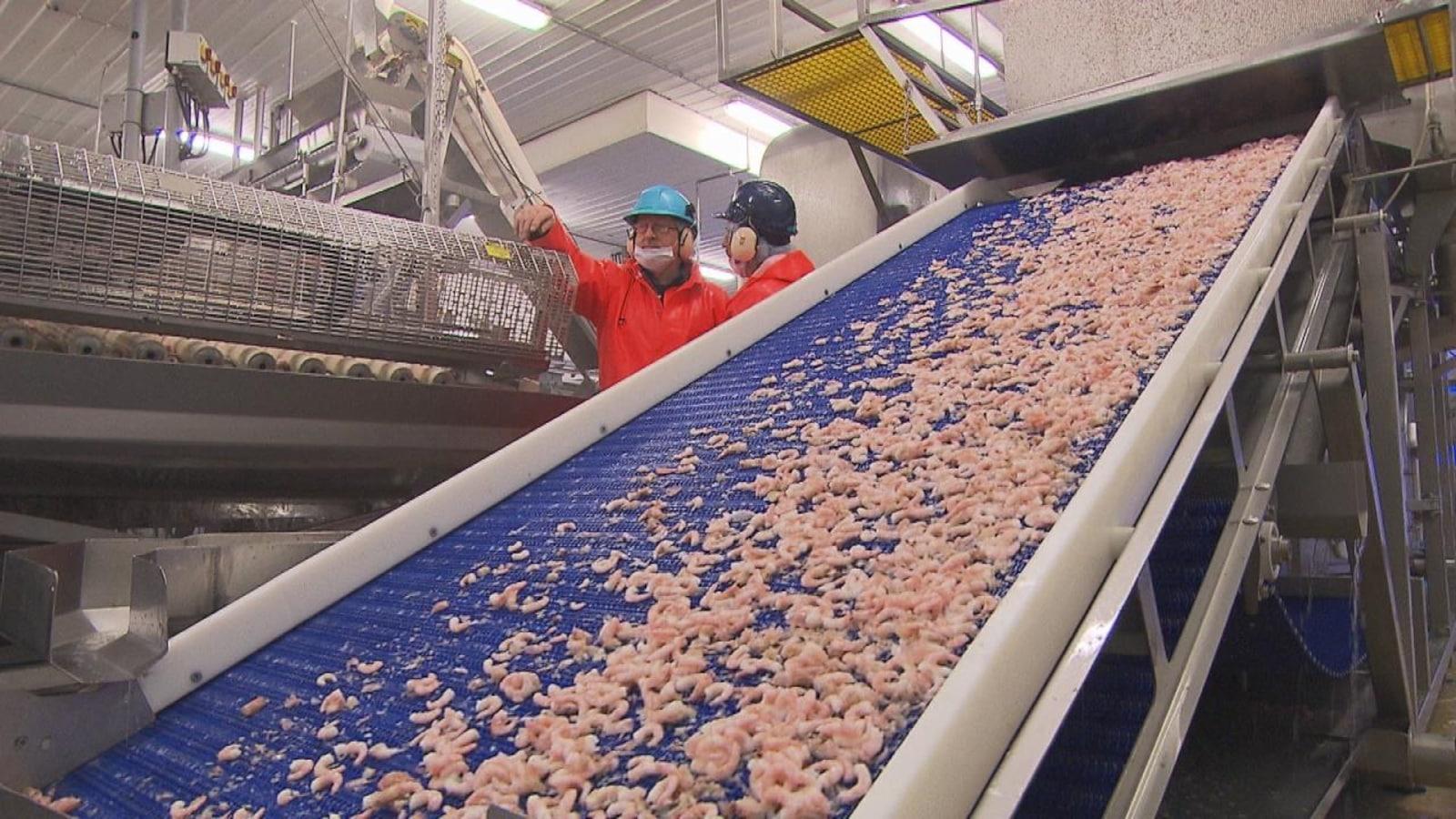 Chaîne de production à l'usine matanaise Les Fruits de mer de l'Est du Québec.