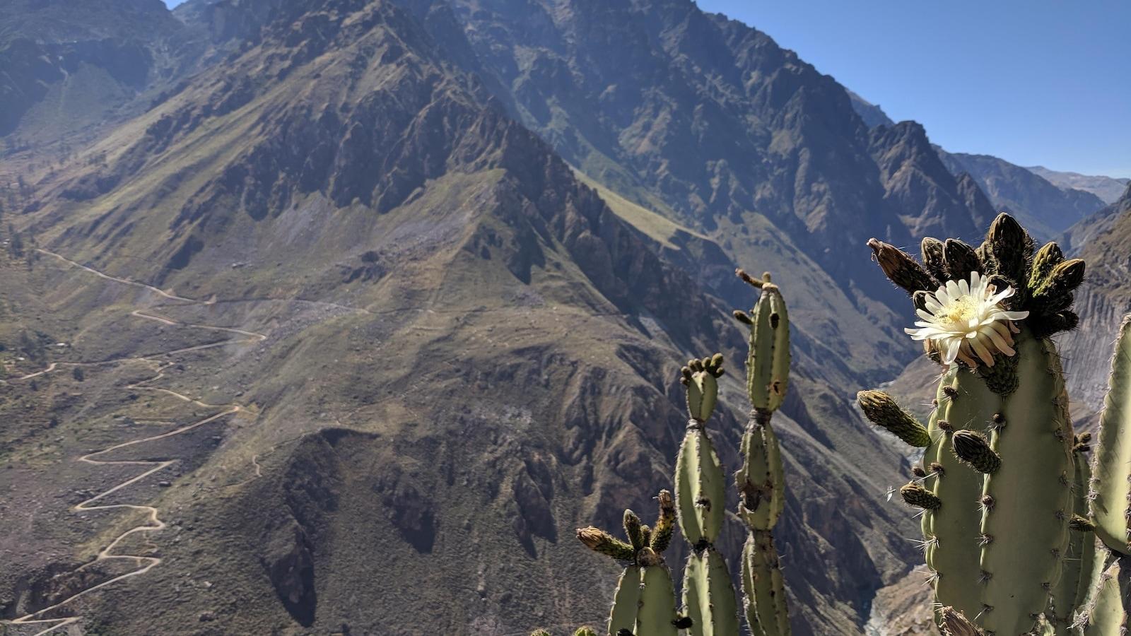 Le canyon de Colca, au Pérou.