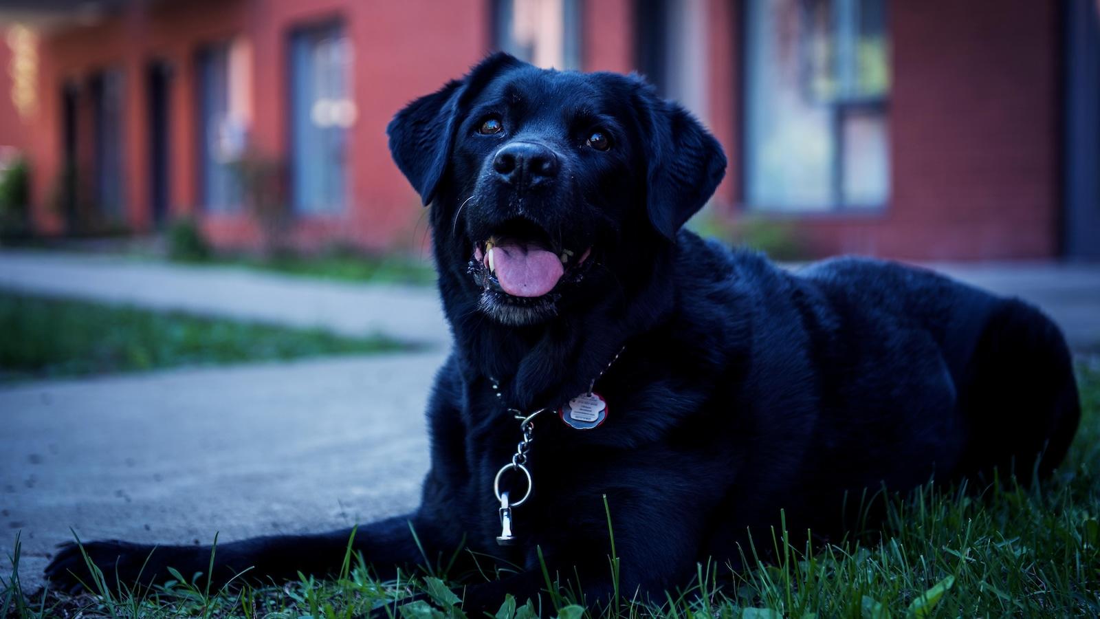 Ghia, la chienne d'Alison Levine, est couchée dans l'herbe.