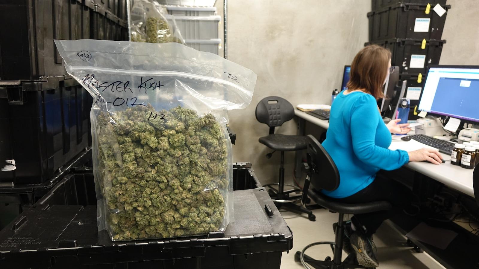 Un sac de cannabis près d'une femme devant un ordinateur.