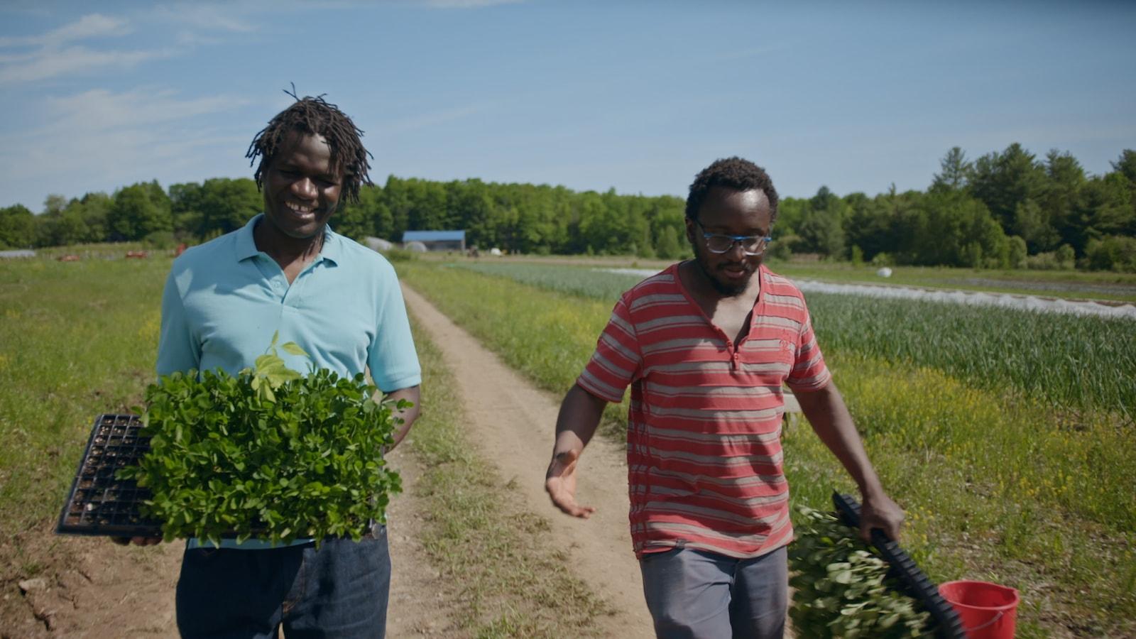 Boucar Diouf et le producteur maraîcher, Edem Amegbo