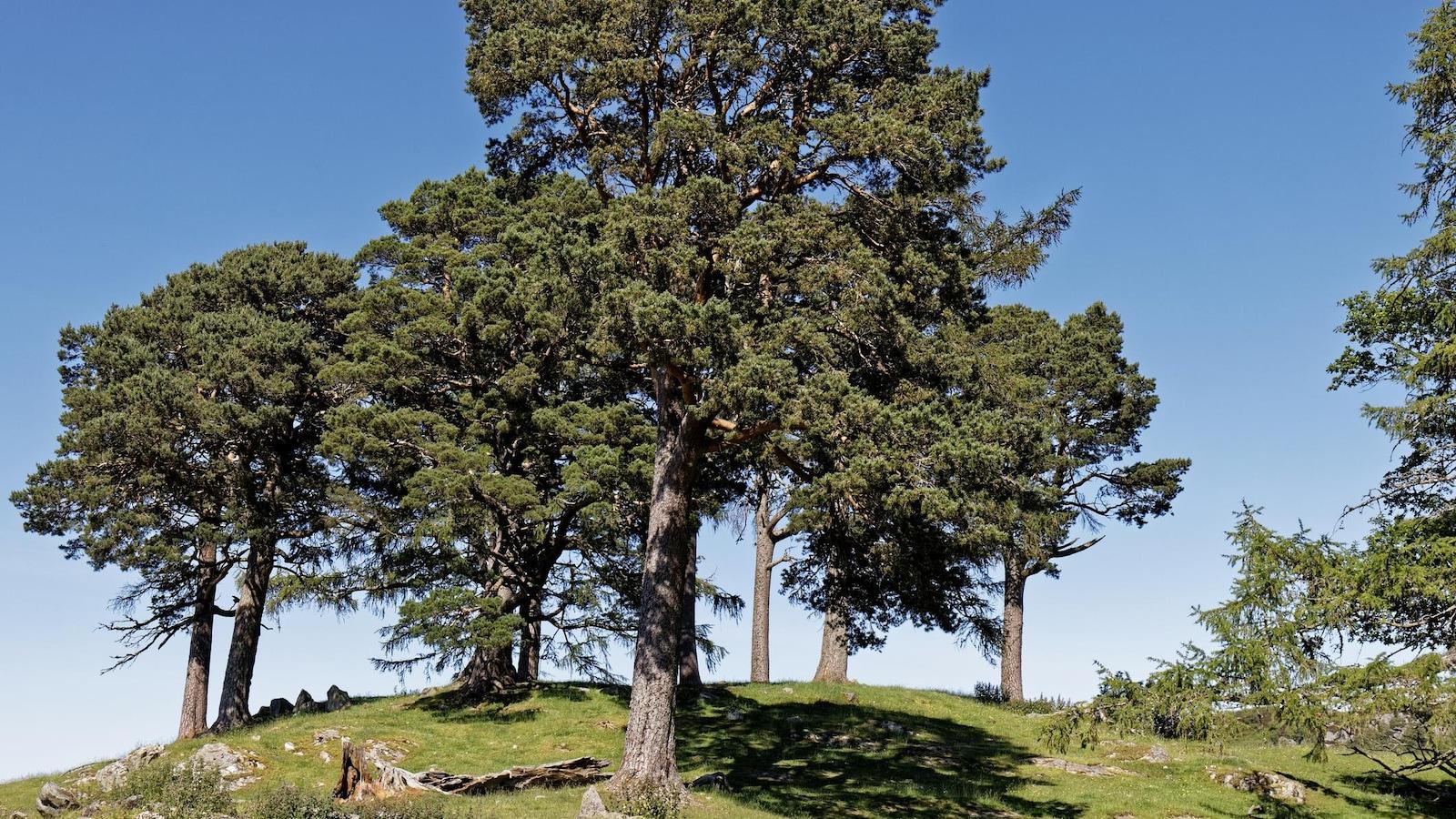 Une colline avec plusieurs arbres.