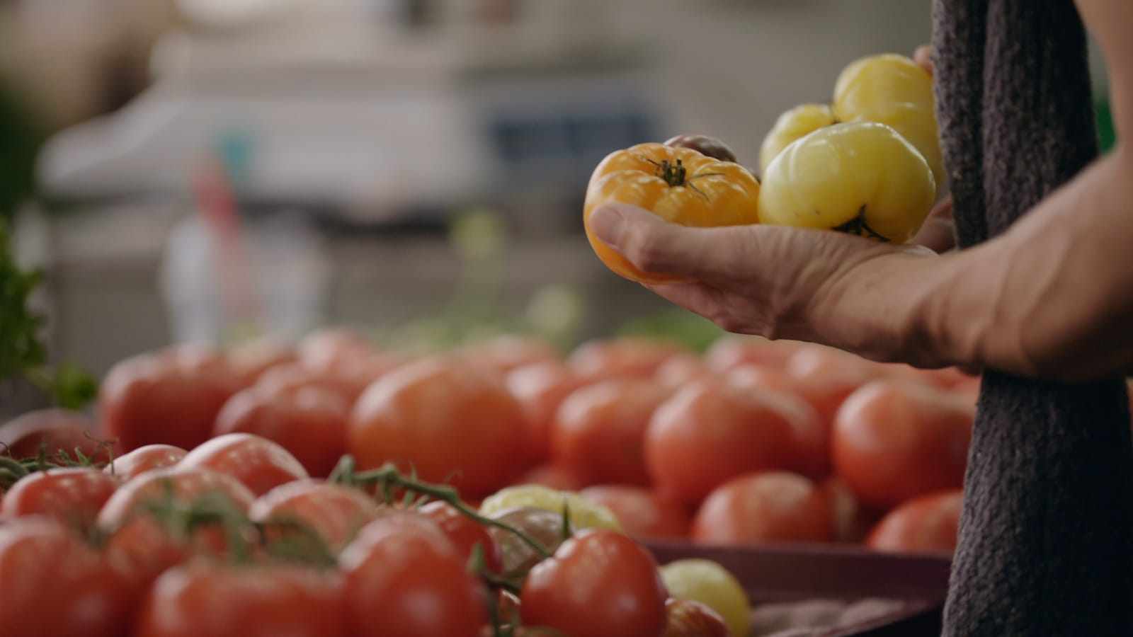 Une main tient des tomates.