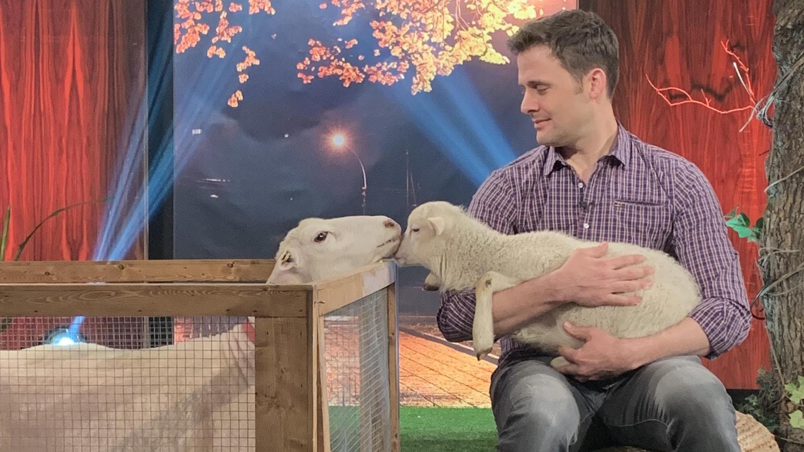 Une brebis fait un bisou à son bébé qui est dans les bras de Sébastien Kfoury.