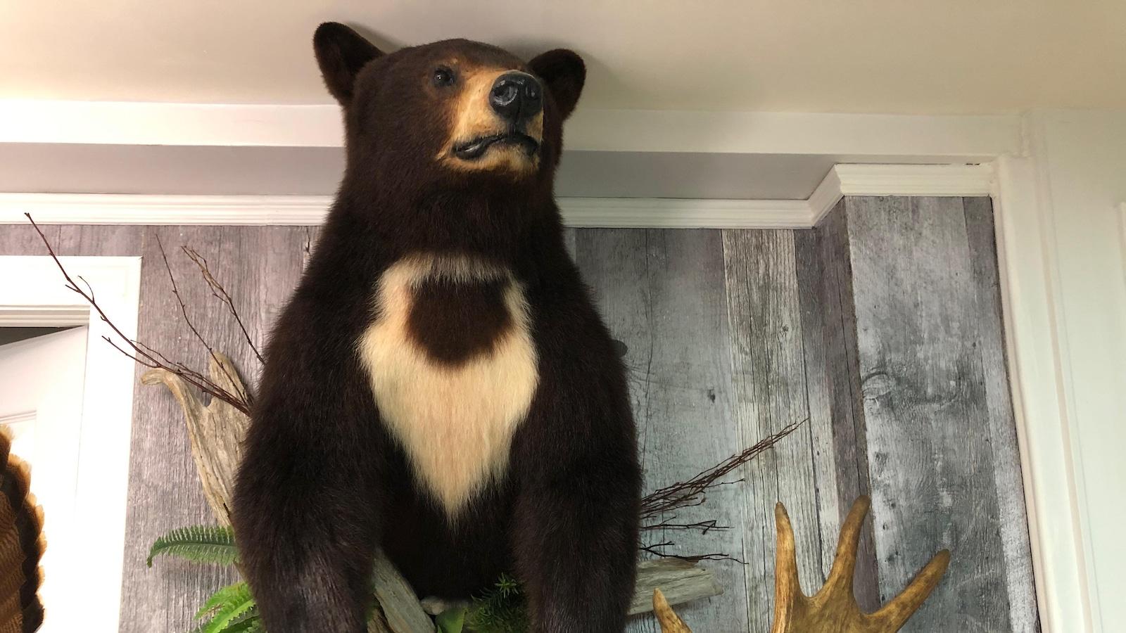 Un ours naturalisé