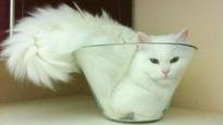 Un chat dans un vase