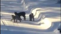 Elle filme une famille de lynx dans sacour