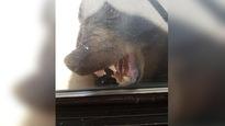 Un ours tente de s'introduire dans une maison