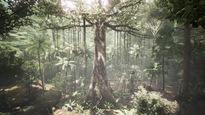 Un grand arbre trône au milieu d'une forêt tropicale.