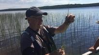 Le biologiste Roger Larivière dresse l'inventaire des plantes aquatiques au lac Vaudray