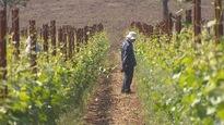 Le vignoble Domaine Roy et fils, qui appartient à des Québécois, pourrait faire les frais d'une bataille commerciale entre le Canada et l'Oregon.