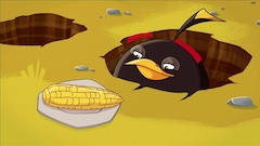 Le choc des maïs