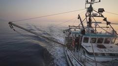 Importation de produits de la pêche: les États-Unis imposent de nouvelles règles