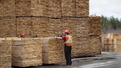 Bois d'oeuvre : le Canada s'attend à l'imposition d'une nouvelle taxe