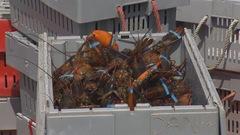 Vaste fraude présumée dans l'industrie du homard en N.-É.
