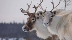Le président régional de la Fédération québécoise des chasseurs et pêcheurs espère plus d'écoute du ministre des Forêts