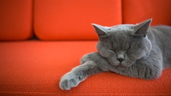 Le chat, de la chasse au sofa