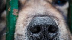 Cookshire-Eaton: un homme sera accusé de cruauté envers un animal