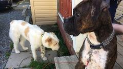 Rouyn-Noranda pourrait enfin avoir son parc canin au printemps