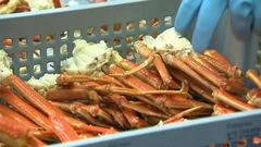 Quotas de crabe des neiges en Gaspésie : l'industrie s'attend à une très forte augmentation