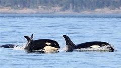 Le Canada en fait-il assez pour protéger ses espèces menacées?