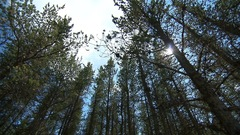 Des groupes écologistes dénoncent la poursuite bâillon de Produits forestiers Résolu