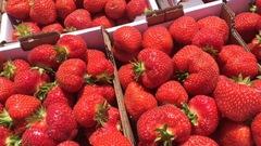 Les fraises du Québec sont arrivées!