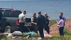 Les baleines mortes seront remorquées sur l'Île-du-Prince-Édouard