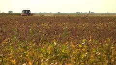 Les pesticides «tueurs d'abeilles» menacent l'ensemble de la biodiversité