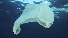 Vers la fin des sacs de plastique à Blanc-Sablon