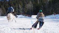 Les skieurs sont tirés par des chevaux à Crowsnest Pass