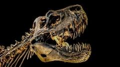 L'arbre généalogique des dinosaures, bientôt revu et corrigé?
