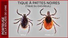 Vigilance requise pour prévenir la maladie de Lyme
