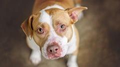 Transformer les excréments de chien en énergie