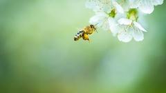 Les pesticides, un risque majeur pour la biodiversité
