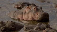 Chanson Hippos pool