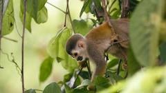 Chanson Les singes