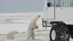 Gros camion dans la toundra